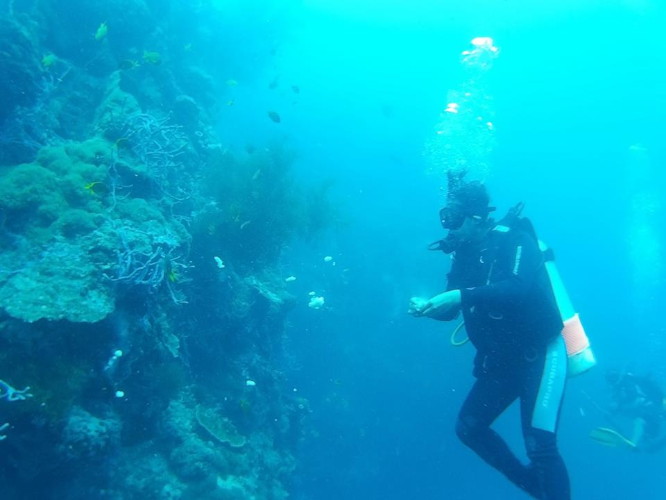 menyelam di pulau menjangan
