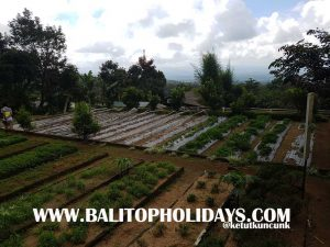 kebun-the-silas