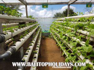 sistem-pertanian-hidroponik