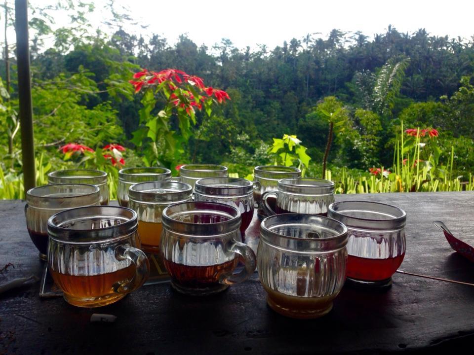 agrowisata kopi luwak